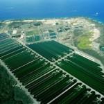 Spirulina hawajska – co powinniśmy o niej wiedzieć?