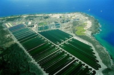 Spirulina hawajska - pola hodowlane alg morskich na Pacyfiku.